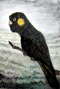blackcockatoo smldoc