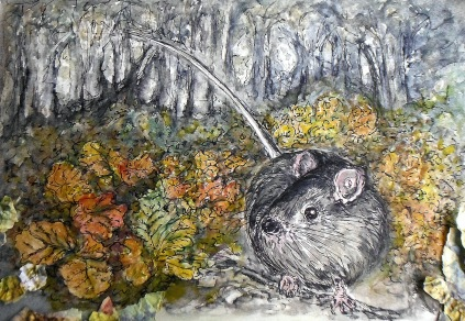 tasmanian native mouse in beech forest